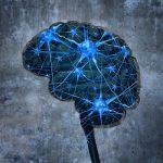 ФМРТ помогает понять человеческий мозг на клеточном уровне