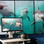 Виртуальная реальность и  МРТ